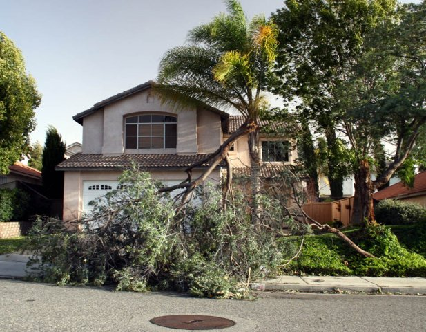 Garden Grove home with broken tree from storm in need of storm damage cleanup.
