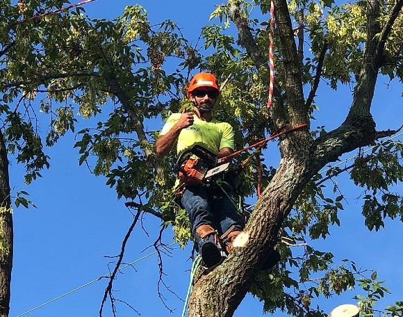 Tree care worker for Garden Grove Tree Service trimming Stanton, California resident's tree.