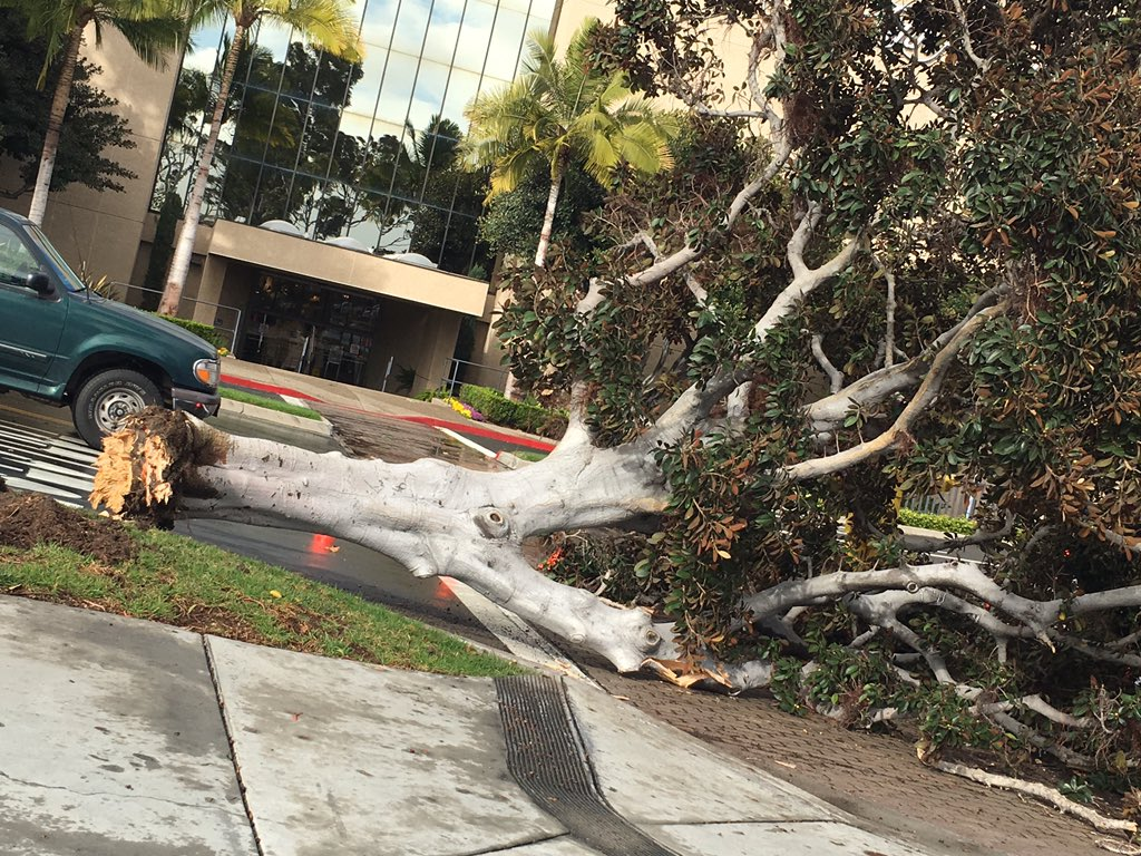 Removal of fallen trees from storm damage cleanup undertaken by Garden Grove Tree Service in Garden Grove, CA.