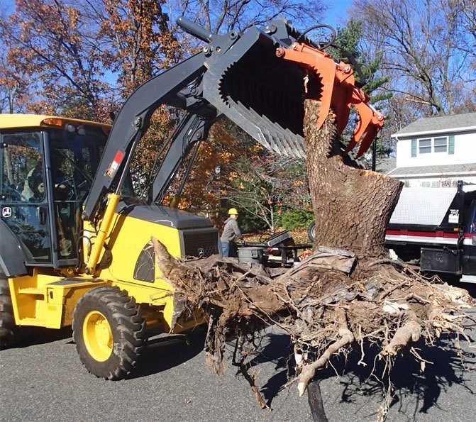 Backhoe with grapple bucket lifting large entire tree stump with roots for disposal.